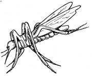 Coloriage Insecte Moustique réaliste