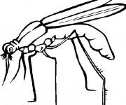 Coloriage et dessins gratuit Moustique en noir et blanc à imprimer