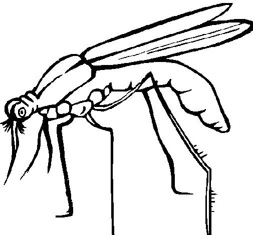 Coloriage et dessins gratuits Moustique en noir et blanc à imprimer