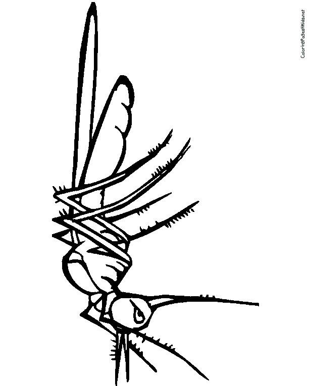 Coloriage et dessins gratuits Moustique énervant à imprimer