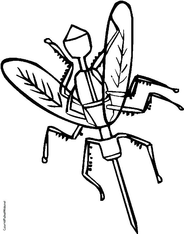 Coloriage et dessins gratuits Moustique et malade à imprimer