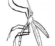 Coloriage Moustique et ses antennes