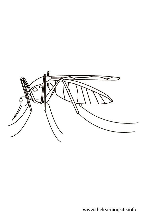 Coloriage et dessins gratuits Moustique Hiver à imprimer