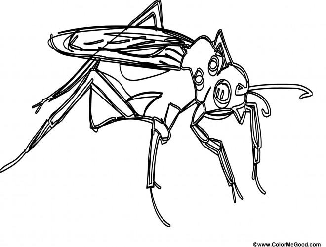 Coloriage et dessins gratuits Moustique insecte couleur à imprimer