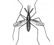 Coloriage et dessins gratuit Moustique Insecte en couleur à imprimer