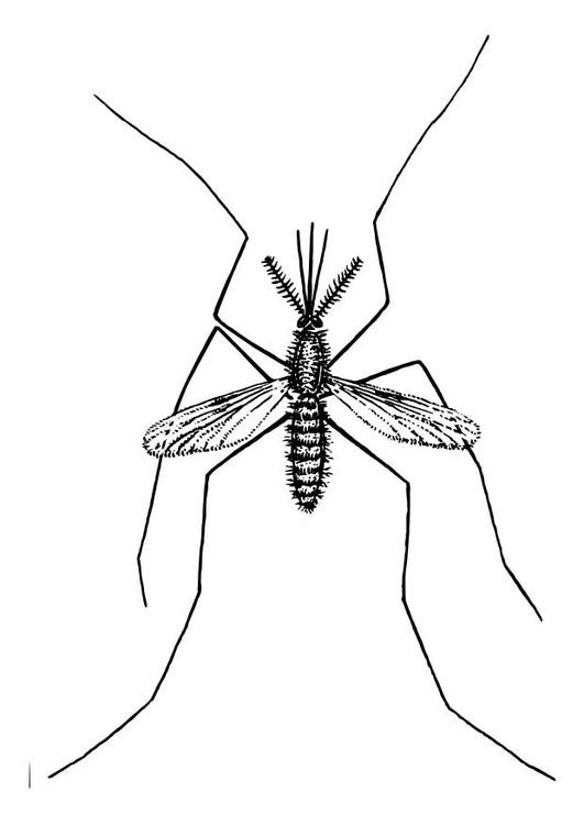 Coloriage et dessins gratuits Moustique Insecte en couleur à imprimer