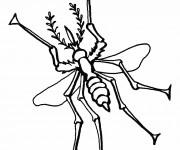 Coloriage Moustique Insecte stylisé
