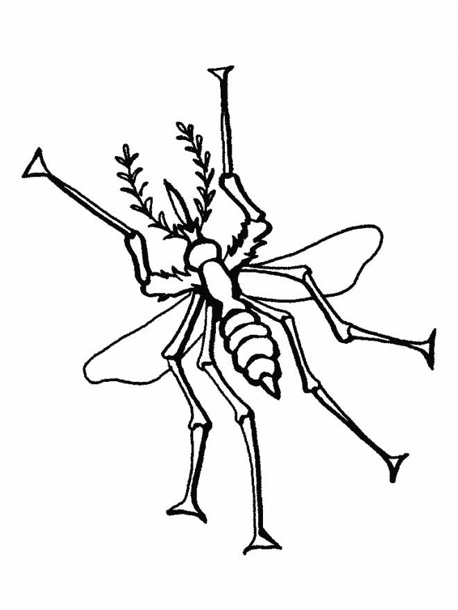 Coloriage et dessins gratuits Moustique Insecte stylisé à imprimer