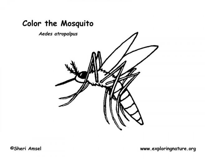 Coloriage et dessins gratuits Moustique suce le sang à imprimer