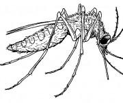Coloriage et dessins gratuit Moustique vecteur de maladie à imprimer