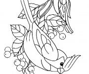 Coloriage dessin  Oiseau 27