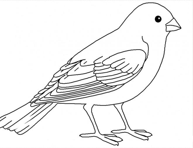Coloriage Oiseaux d couper dessin
