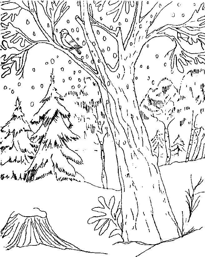 Coloriage La Neige Tombe Dans La Forêt Dessin Gratuit à
