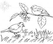 Coloriage Les oiseaux chantent à la Campagne