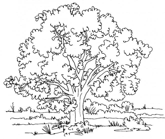 Coloriage et dessins gratuits Paysage d'arbre dans la Campagne à imprimer