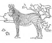Coloriage et dessins gratuit Zèbre dans la Forêt à imprimer