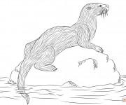 Coloriage Animal de Rivière