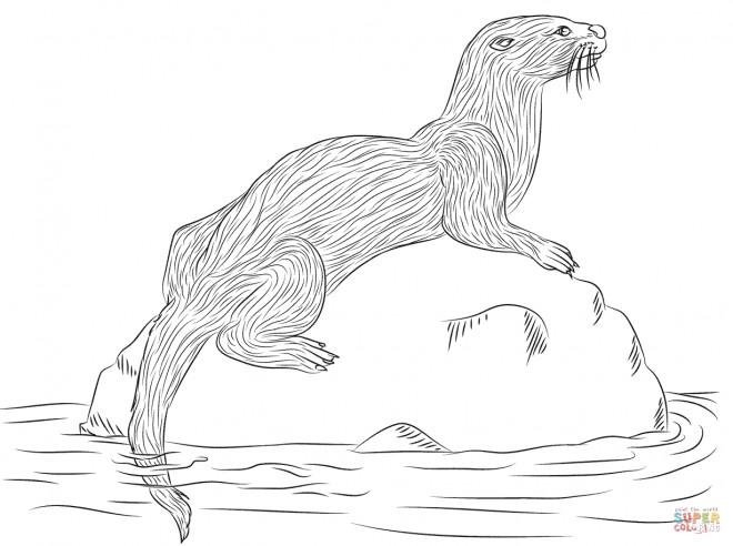 Coloriage et dessins gratuits Animal de Rivière à imprimer