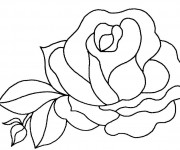 Coloriage Belle Rose