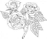 Coloriage et dessins gratuit Bouquet Roses facile à imprimer