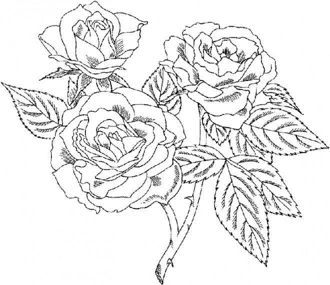 Coloriage Bouquet Roses Facile Dessin Gratuit A Imprimer