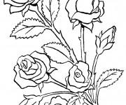 Coloriage Fleurs en couleur