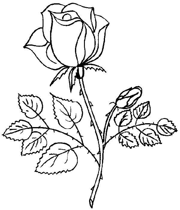 Coloriage et dessins gratuits Heirloom Roses à imprimer