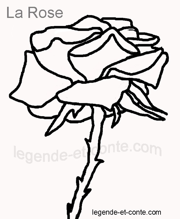 Coloriage et dessins gratuits La Rose facile à imprimer