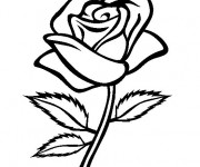 Coloriage Rose à décorer