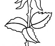 Coloriage Rose à télécharger