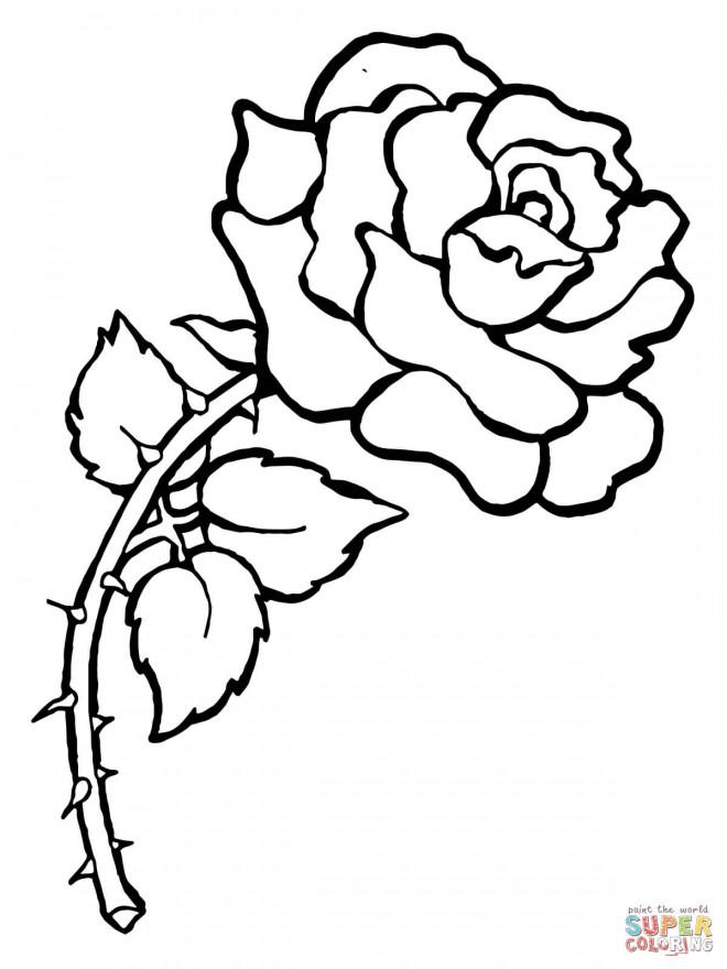Coloriage et dessins gratuits Rose Adulte à imprimer