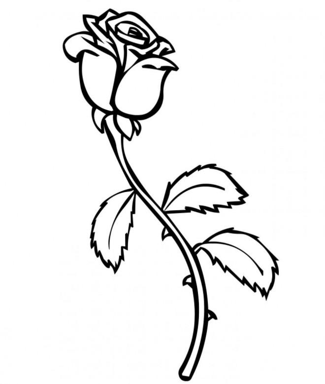 Coloriage Rose Blanche Dessin Gratuit A Imprimer