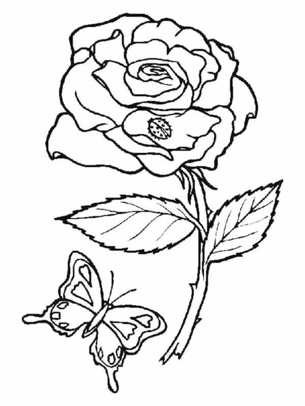 Coloriage Rose Damour Dessin Gratuit à Imprimer