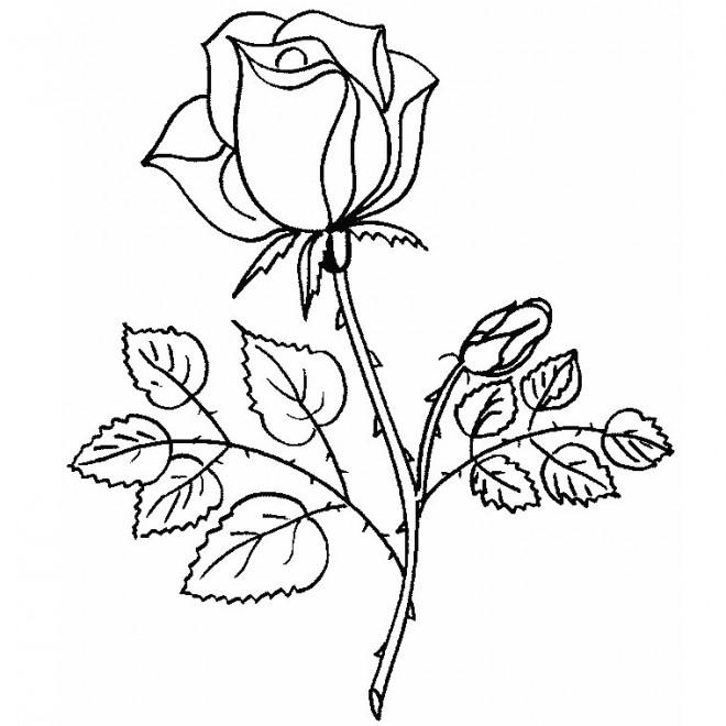 Coloriage Rose En Couleur Dessin Gratuit à Imprimer