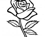 Coloriage Rose en noir
