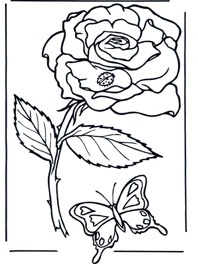Coloriage et dessins gratuits Rose et Papillon à imprimer