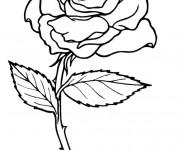 Coloriage Rose pour enfant