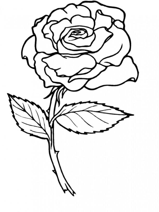 Coloriage et dessins gratuits Rose pour enfant à imprimer