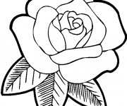 Coloriage Rose pour maman