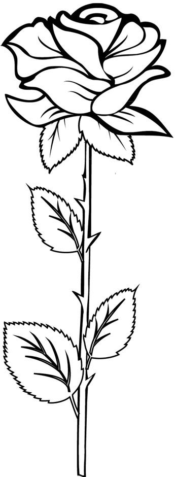 Coloriage Roses gratuit à imprimer liste 40 à 60