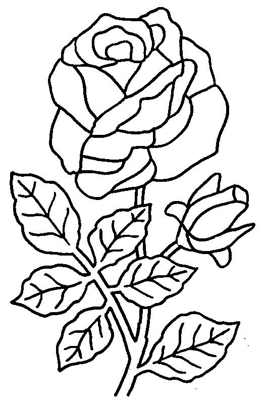 Coloriage et dessins gratuits Roses agréable à imprimer