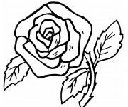 Coloriage et dessins gratuit Roses au crayon à imprimer