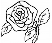 Coloriage Roses au crayon