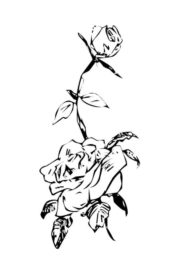 Coloriage et dessins gratuits Roses au crayon magnifique à imprimer