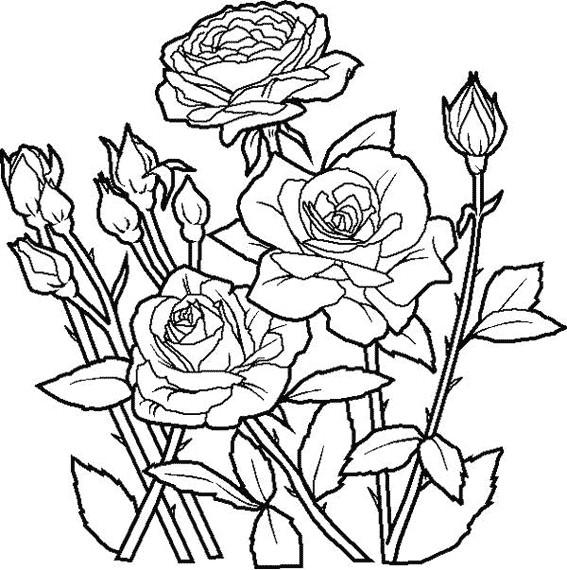 Coloriage et dessins gratuits Roses au jardin à imprimer