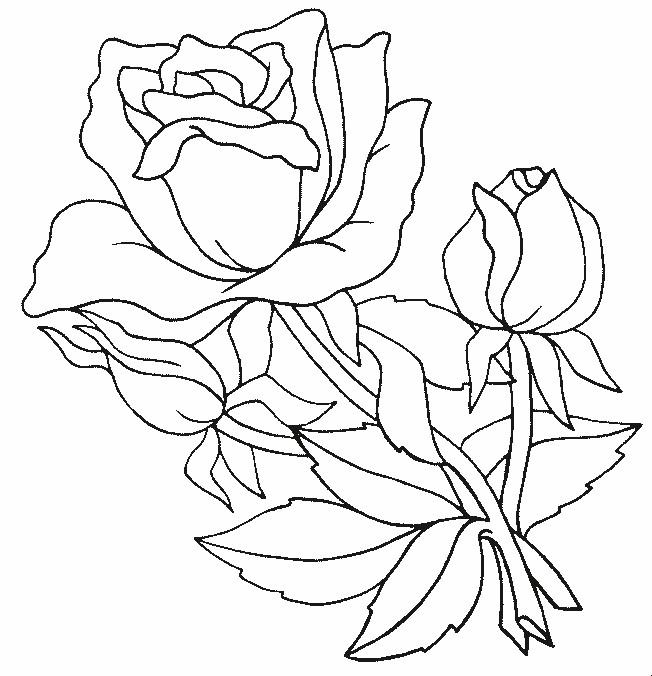 Coloriage et dessins gratuits Roses et fleurs à imprimer