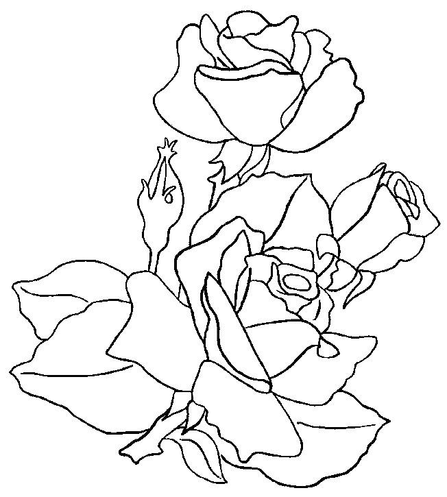 coloriage roses et plantes de printemps dessin gratuit imprimer. Black Bedroom Furniture Sets. Home Design Ideas