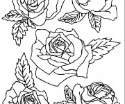 Coloriage Roses facile
