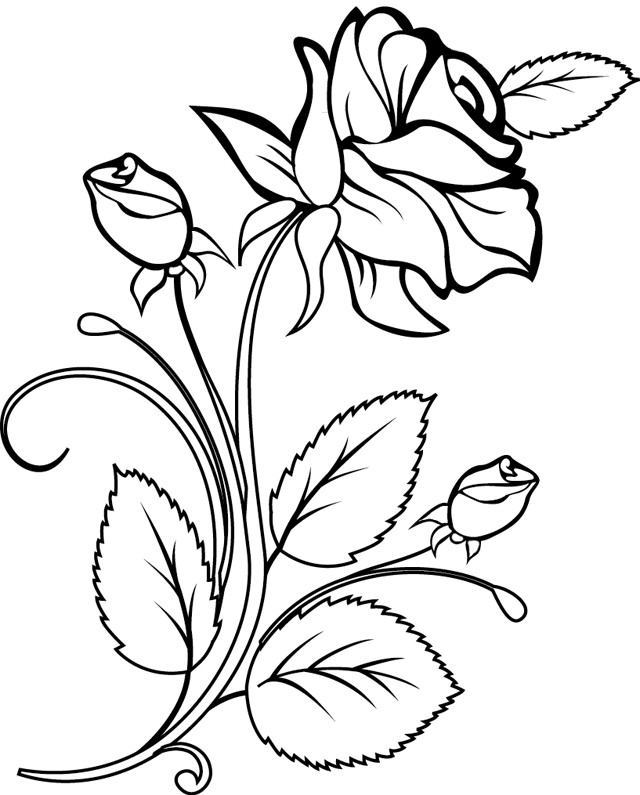 Image Result For Flower Vase Drawing Picture