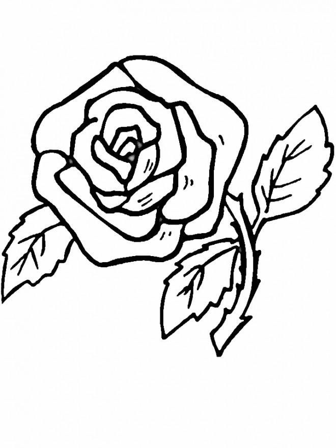 Coloriage et dessins gratuits Roses pour téléchargement à imprimer